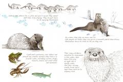 Beavers.w