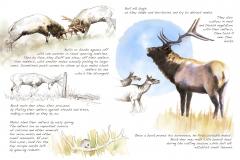 Elk.w