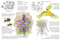 Pollinators.w