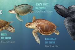 Sea.turtles.w