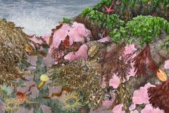 anemones.octopus