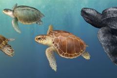 4-Turtle.mural_.w